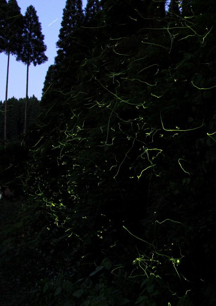優秀賞 内山 稔朗さん(坂本)「ホタル乱舞5」