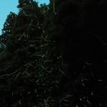 特選  山形 俊男さん(豊原)  「山里の舞踏会」