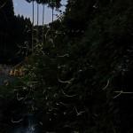 入選  木島 衛さん(袖ヶ浦市)  「森の妖精」